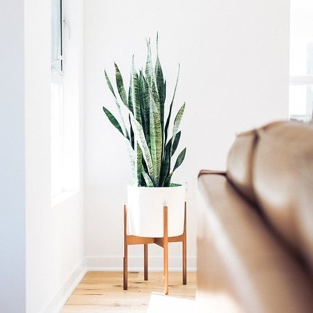 DESIGN ADVICE - Decorating with Houseplants  |  5.16.18