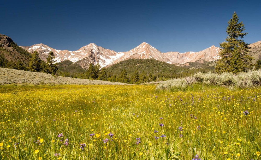 Boulder Mountains wildflowers (1).jpg