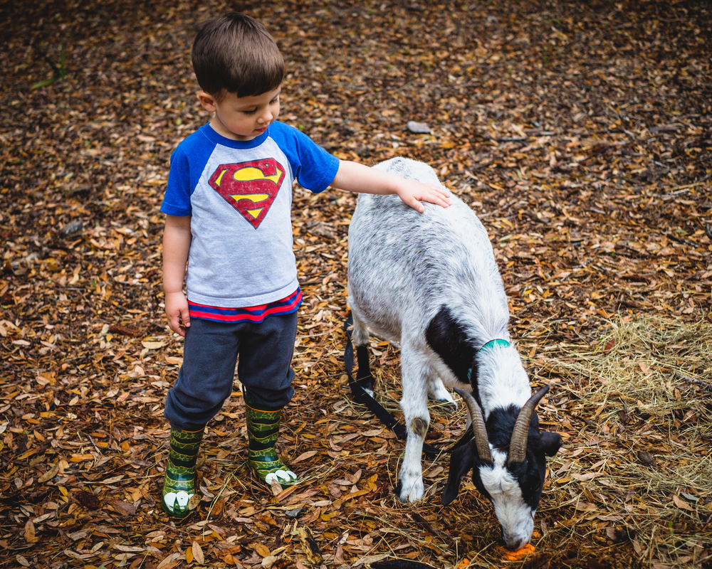 A boy and his goat.