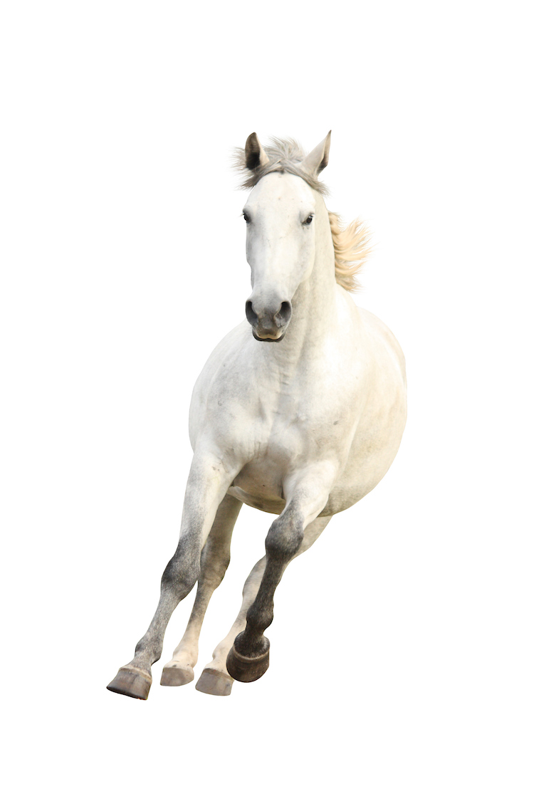 White-beautiful-horse-galloping (Sized).jpg
