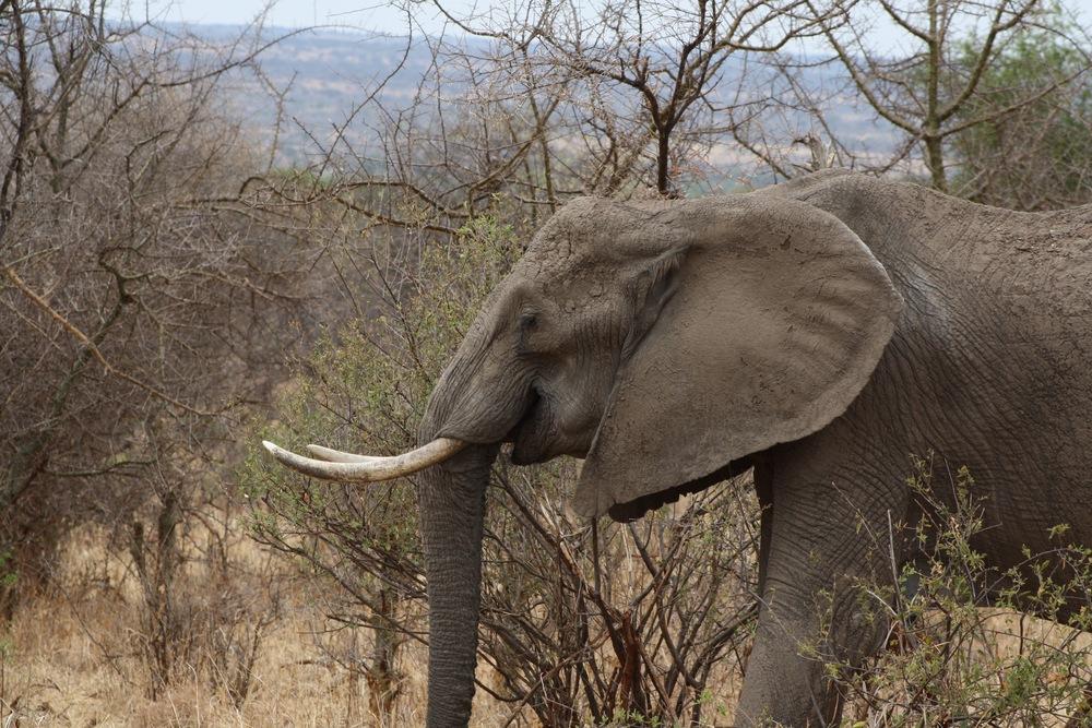 Dipti Elephants.jpg