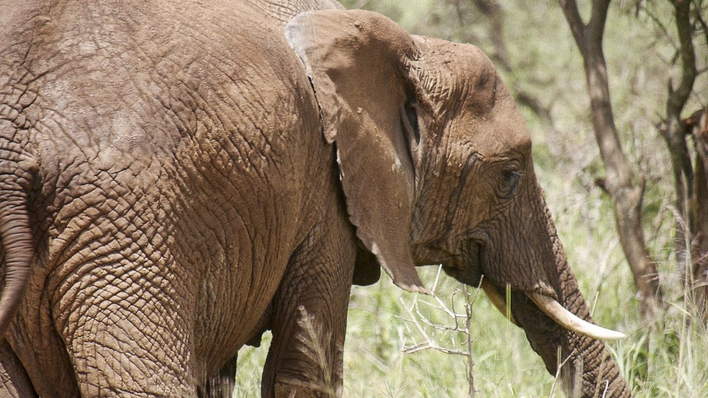 Elephant Butt.jpg
