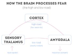 brainfear