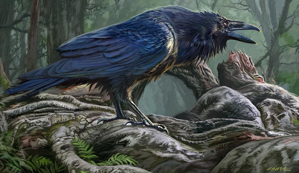 Raven sample.jpg
