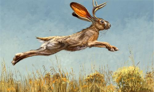 illustrations paintings art prints the great american jackalope
