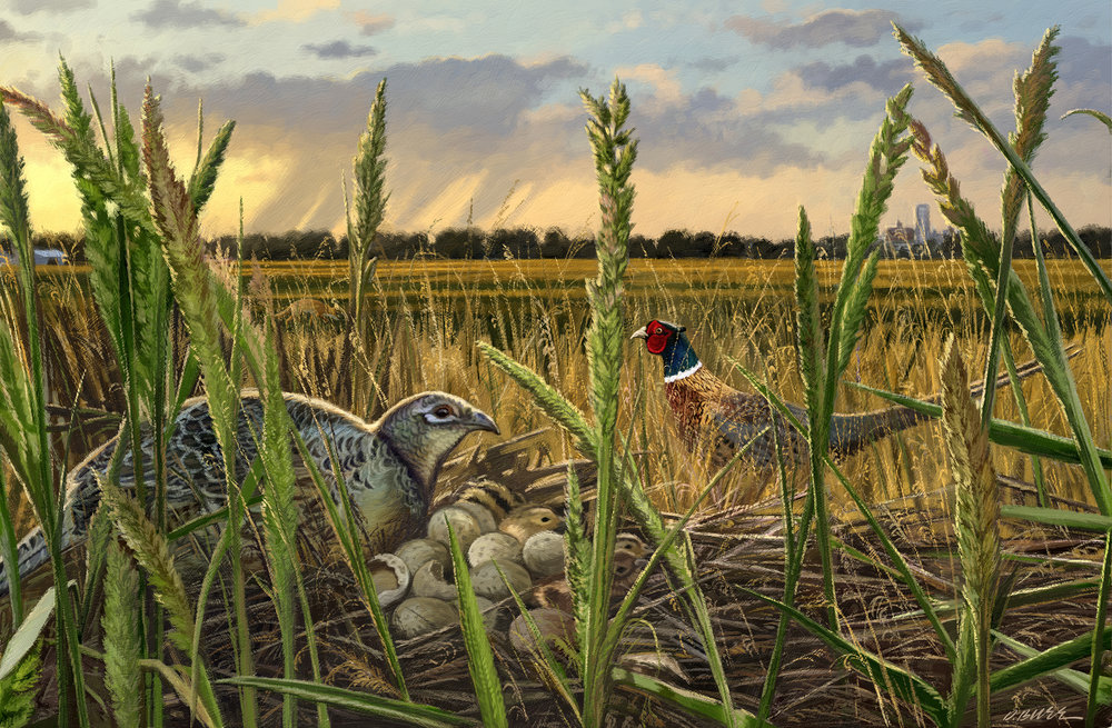 Nesting pheasants painting revise.jpg