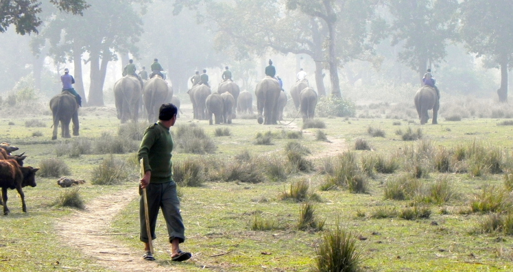 A community of elephants and their handlers leave their stable at the Khorsor Elephant Breeding Center for their daytime grazing in the forests, grasslands, and rivers of the Chitwan National Park, Nepal | Photo: Piers Locke, 2011