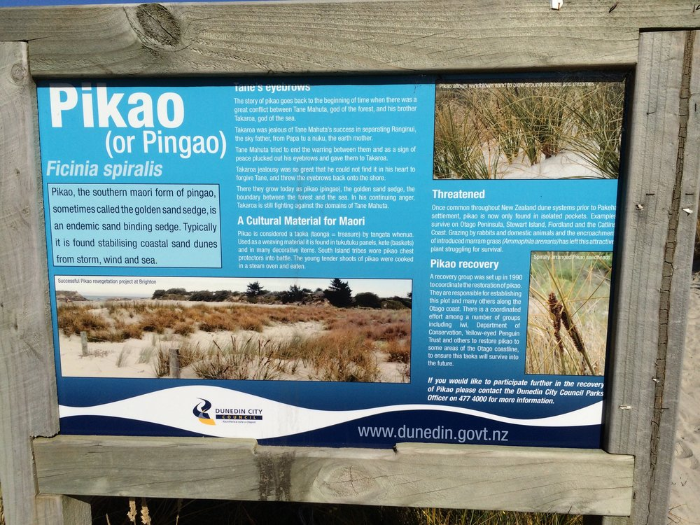 Photo of Dunedin City Council notification of piako protection at Brighton Beach, 2015. In her book, Lyn discusses how the Dunedin City Council's piako restoration project has its origins in understanding the dune system from the perspective of Māori Environmental Knowledge.  Photo: Lyn Carter.