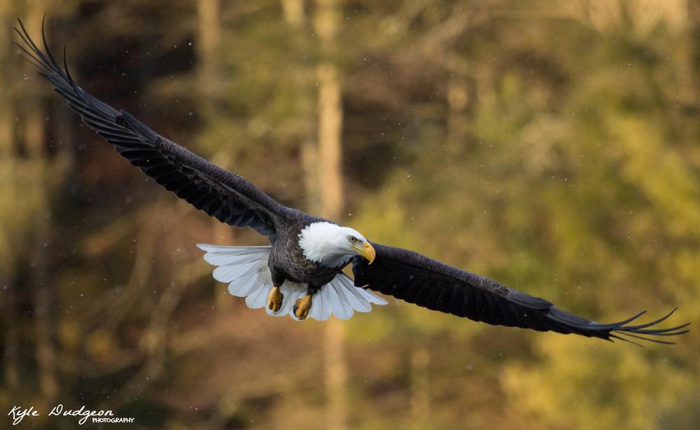 Eagle Rio #1.jpg