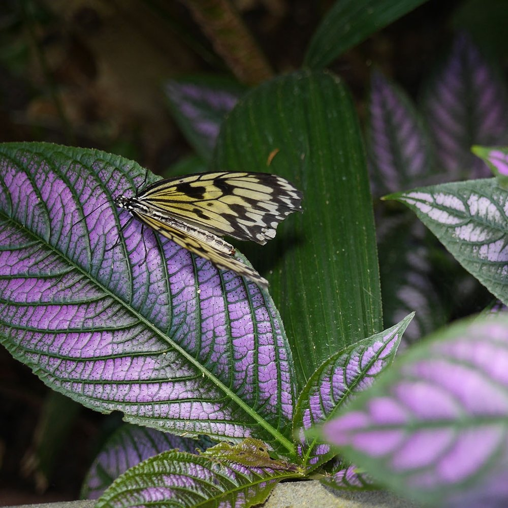 Victoria Butterfly Gardens - CompanyFree admission for you and your guests (max 4 people)TTGFree admission for you and your guests (max 4 people)