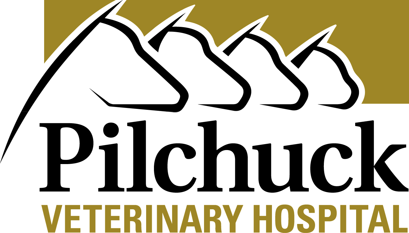 Large and Small: Pilchuck Veterinary Hospital Blog