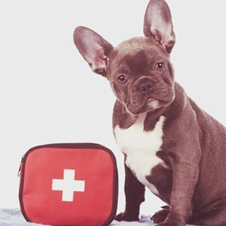 What items should you include in a first aid kit for your animal friends?  April is #PetFirstAidAwareness Month, and Dr. Holly Droske shares a handy list and some important pet first aid basics: blog.pilchuckvet.com 🐱🐶 #pilchuckvet #pilchuckveterinary #petsafety #snohomish #petfirstaid #veterinary