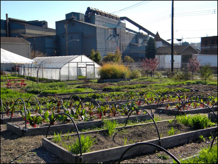 Braddock Farms