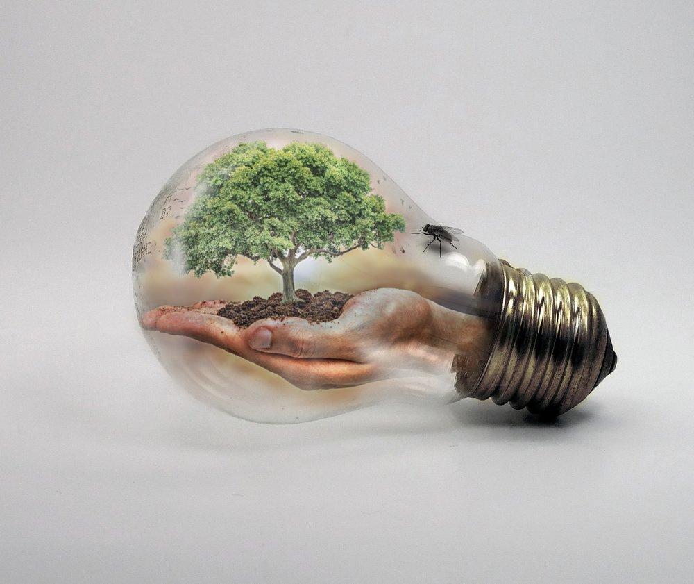 bulb-2368396_1920.jpg