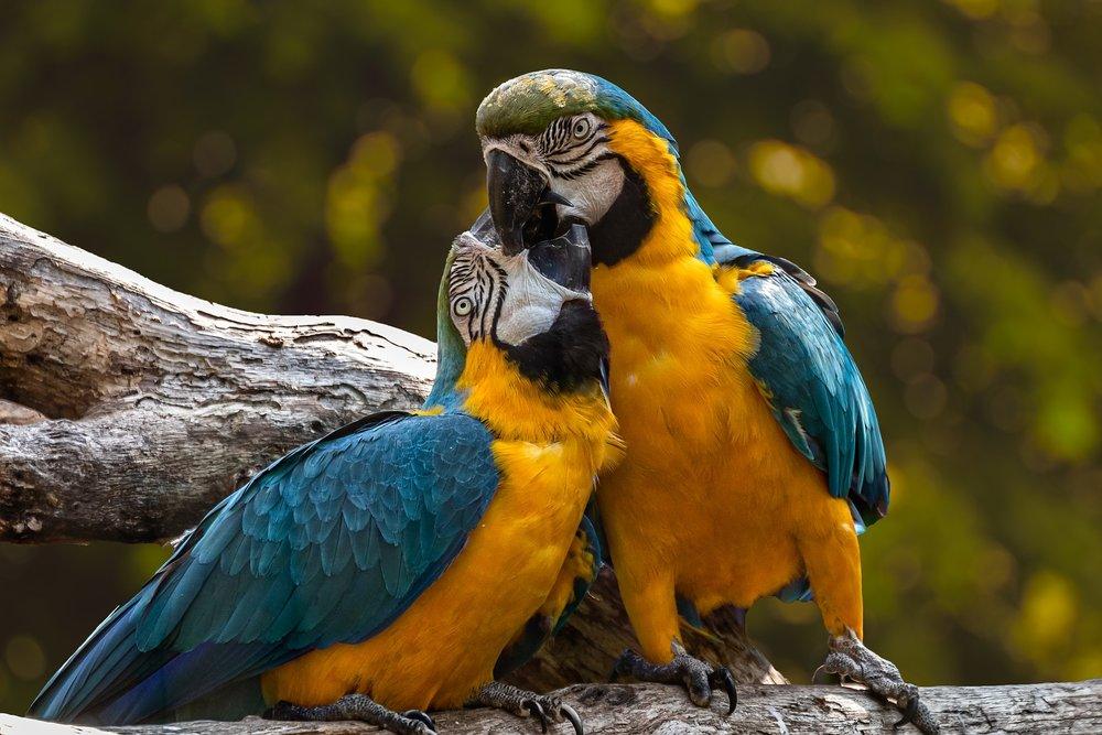 parrots-3427188_1920.jpg