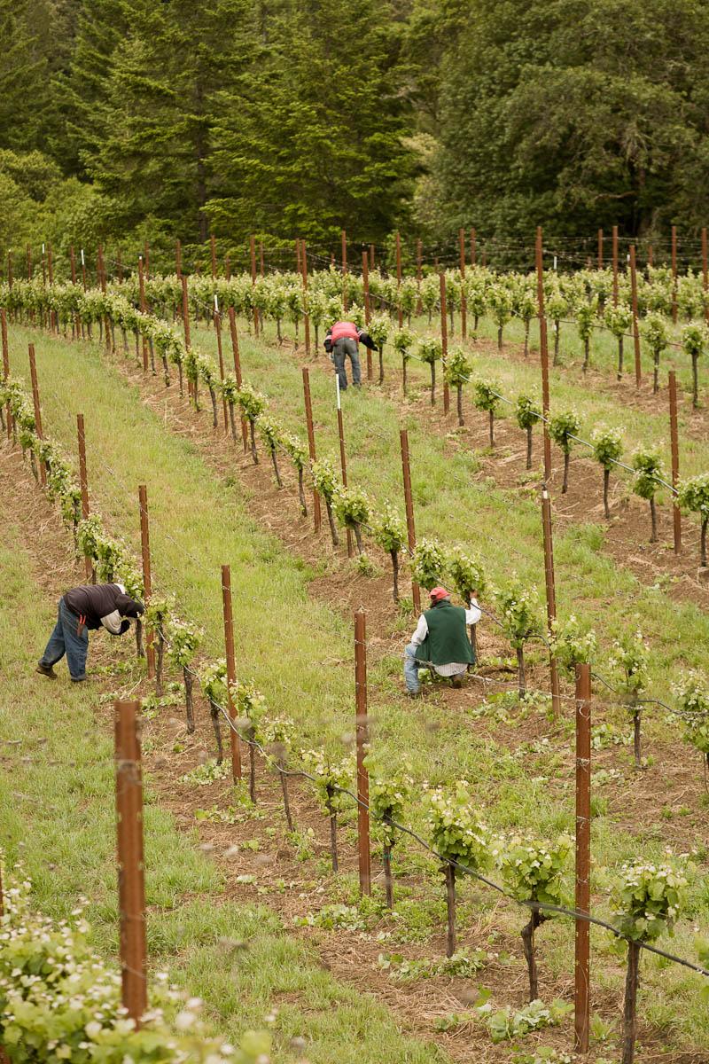 vino_finals_08.jpg