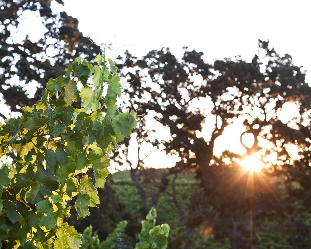 vino_finals_36.jpg