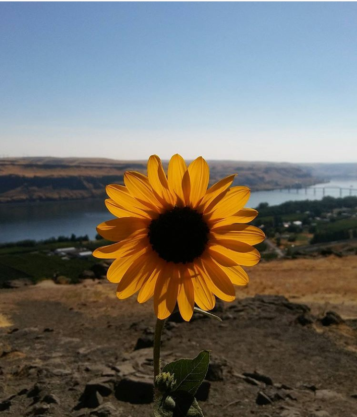 The Columbia Gorge Pre-Fire 2017