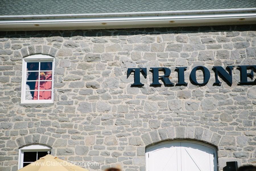 trione winery wedding17