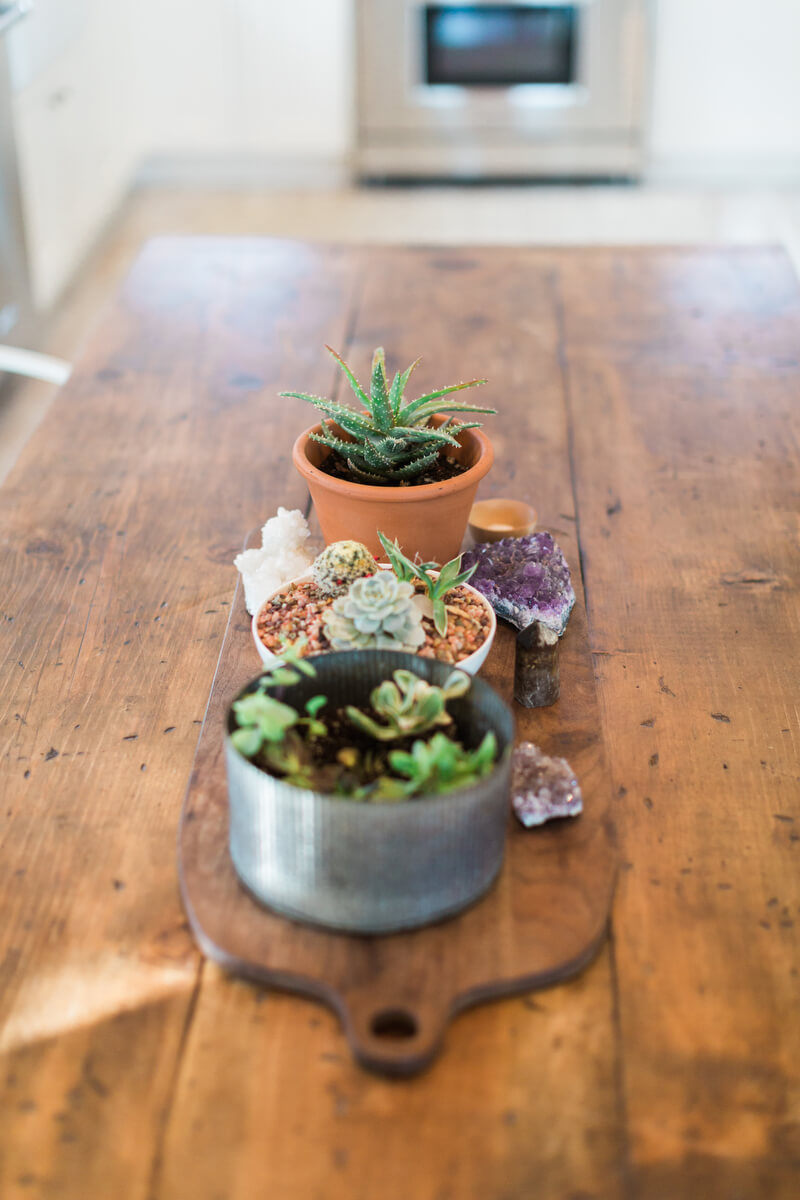 three small planters with different plants on dining table