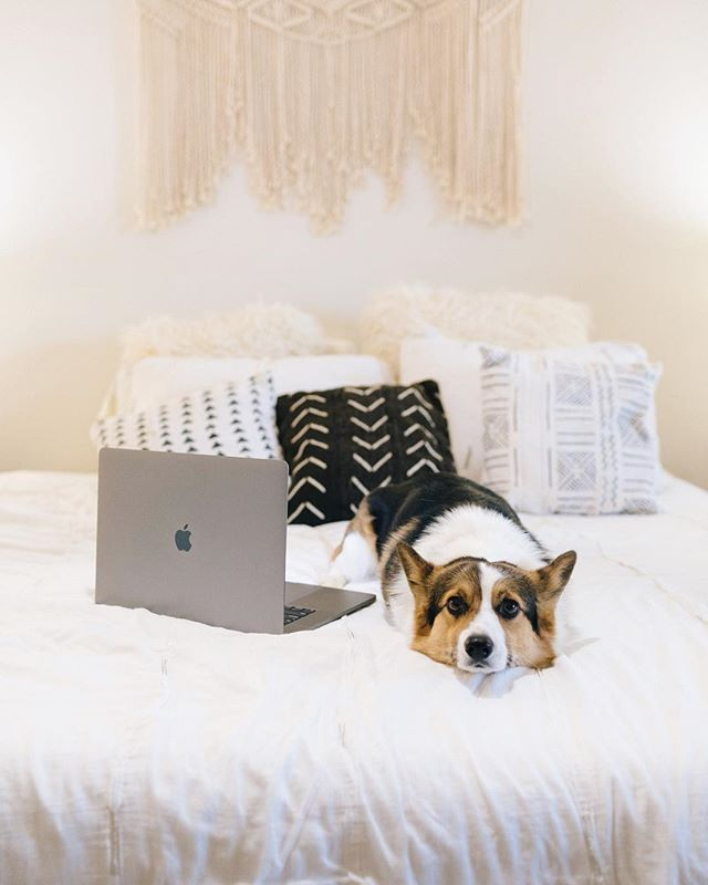 Duke is totally a photographers dog... He will hold a pose every time the camera comes out and no matter what has to be in front of the lens.⠀ 🐶⠀ Every time I leave the house with my camera bag packed he gets very anxious and has to participate in some very disruptive #corgi behavior that normally involves some kind of shoe destruction.⠀ ⠀ It makes leaving him behind extra hard... Here he is trying really hard to me a #stockphotography model for @getfoundstock⠀ ⠀ ⠀ ⠀ BTW I just posted my first #instastory with @latermedia and it was so easy!!! Can't wait to streamline all the stories I have saved up on my hard drive for @getfoundstock #calledtobecreative #flashesofdelight #creativepreneur #pursuepretty #thatsdarling #risingtidesociety #mycreativebiz #liveauthentic #savvybusinessowner #girlboss #thehappynow #creativelifehappylife #darlingmovement #makersgonnamake #theeverygirl #womeninbiz #makersmovement #stockphoto #stockphotos #livecolorfully #dscolor #abmhappylife #myunicornlife #chasinglight #ihavethisthingwithcolor