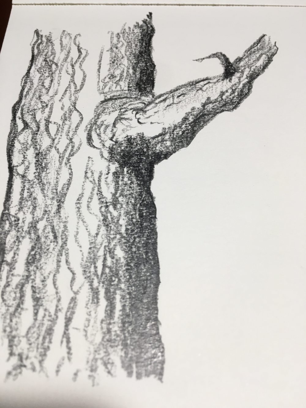 drawing trees.png