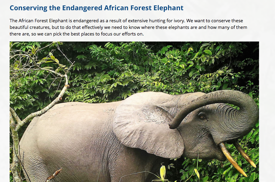 zooniverse elephant