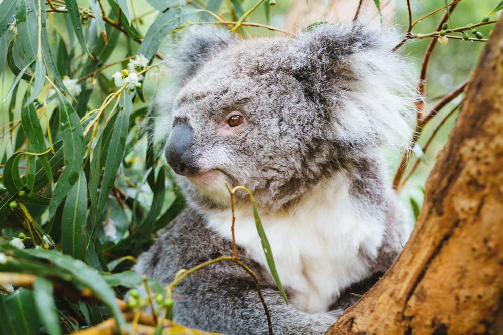 Experience Intimate Encounters with Australia's Amazing Wildlife