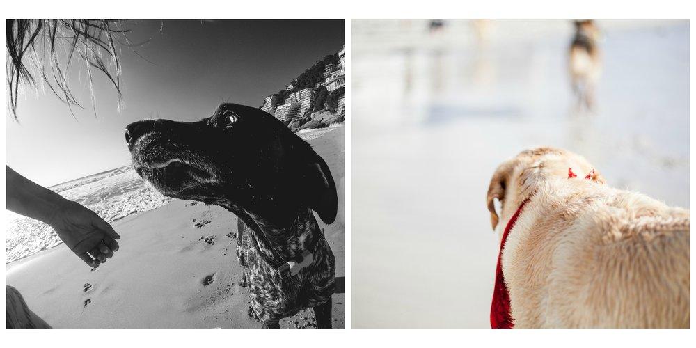 PicMonkey Collage-8 copy 2.jpg