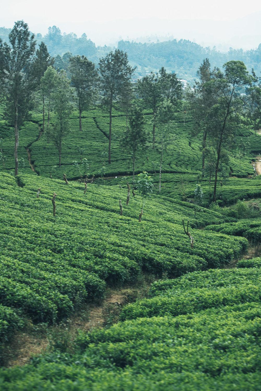 Lanka  (192 of 206).jpg