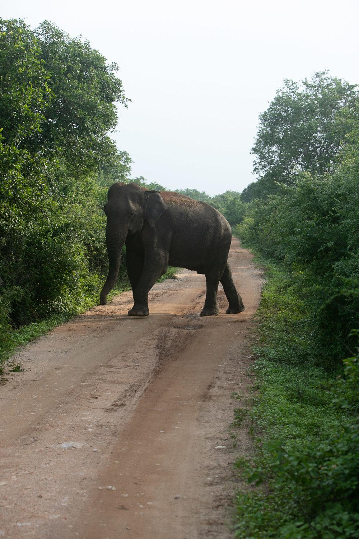 Lanka  (150 of 206).jpg