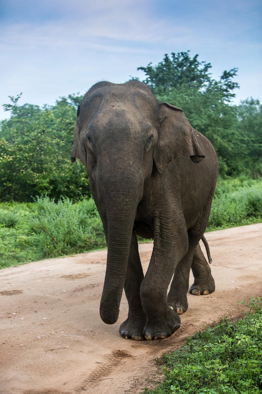 Lanka  (142 of 206).jpg