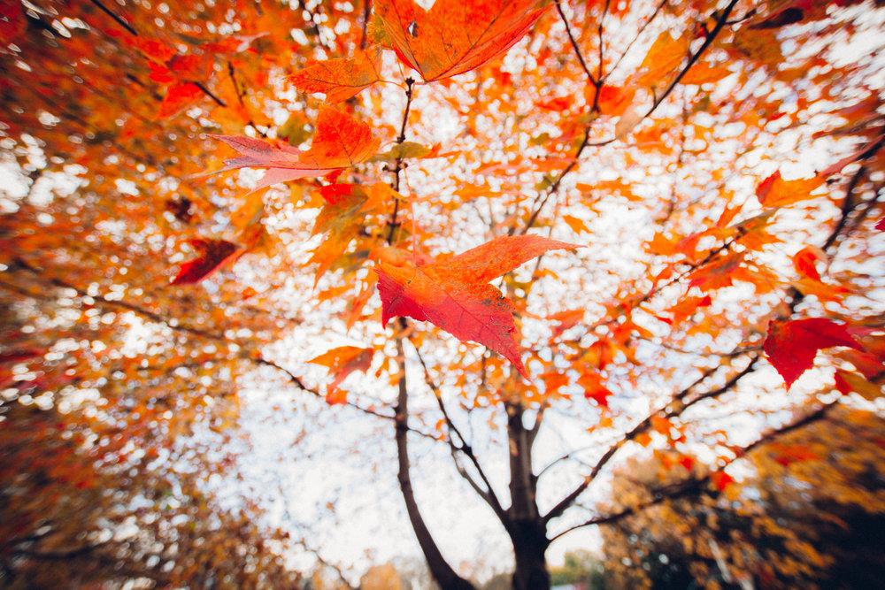 fall-34.jpg