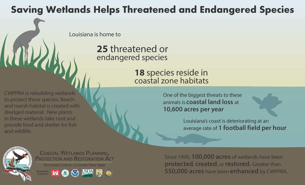 Endangered Animals_Page_1.jpg