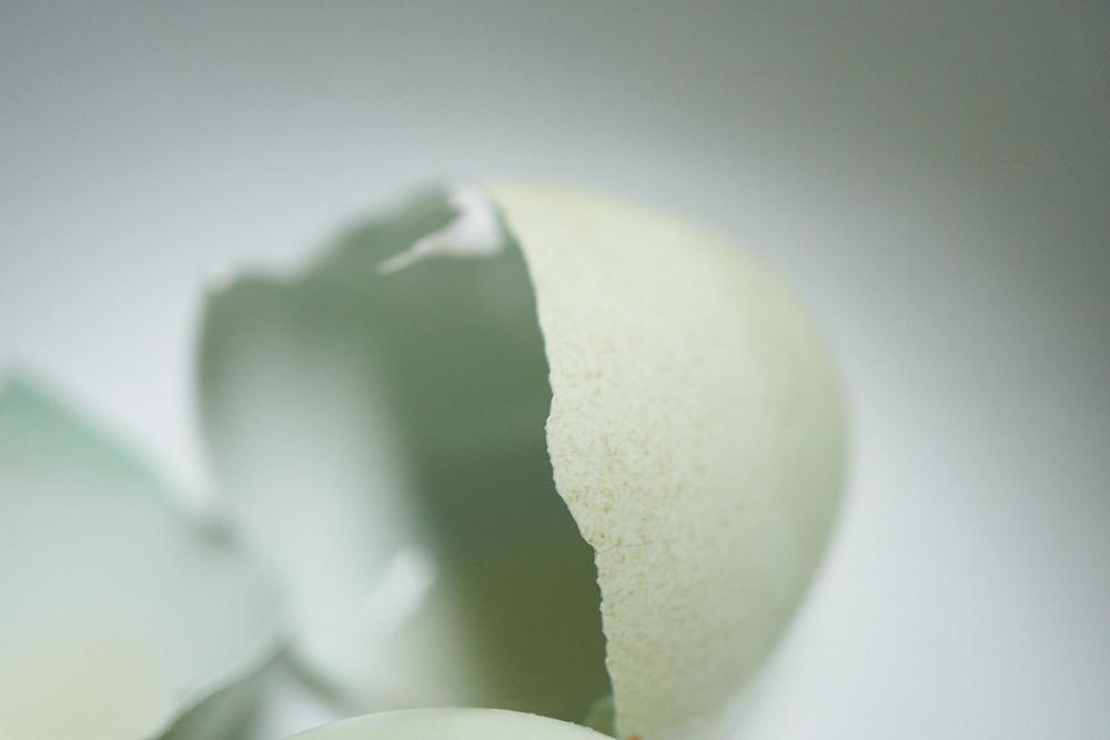 6.14.16_Promo_Garlic__DSC3404.jpg