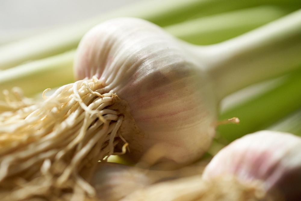 6.14.16_Promo_Garlic_0271.jpg