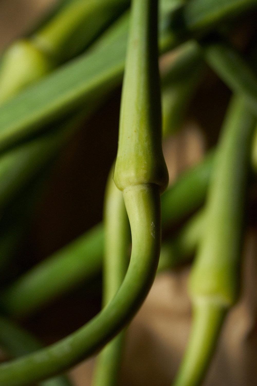 6.14.16_Promo_Garlic_0303.jpg