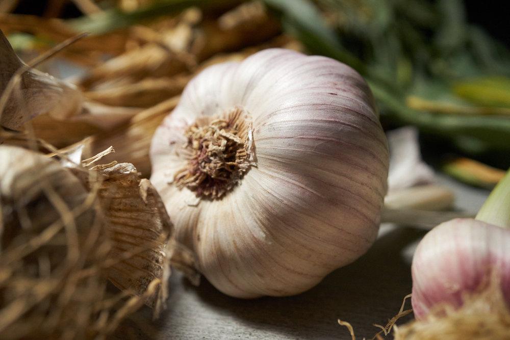 6.14.16_Promo_Garlic_2239.jpg