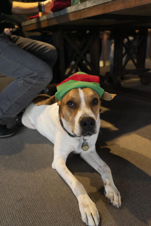 Duke the Elf