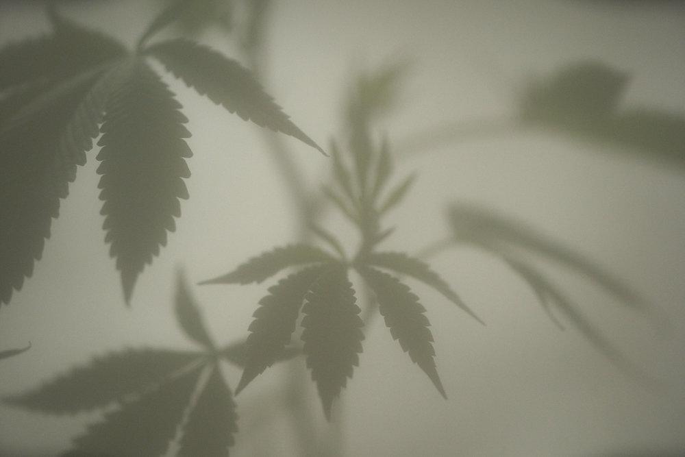Plants on glass_0021.jpg
