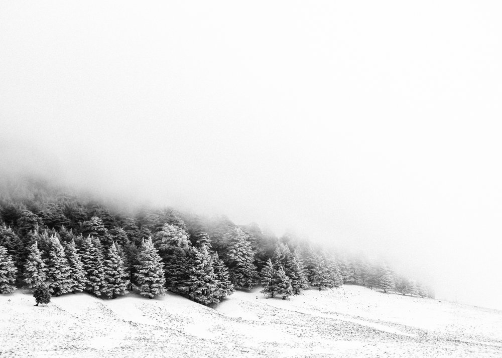 Ifrane_Snow_Trees.jpg