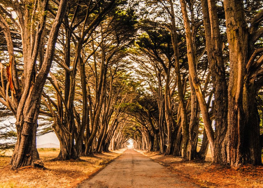 PointReyes_TreeTunnel.jpg