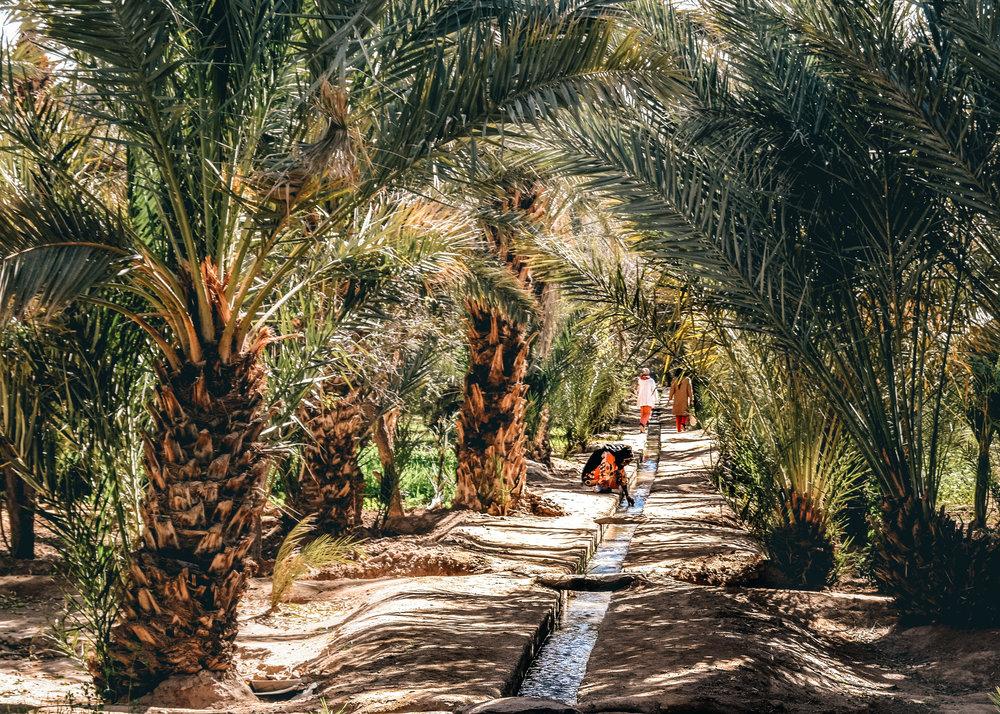 Sahara_Oasis-2.jpg