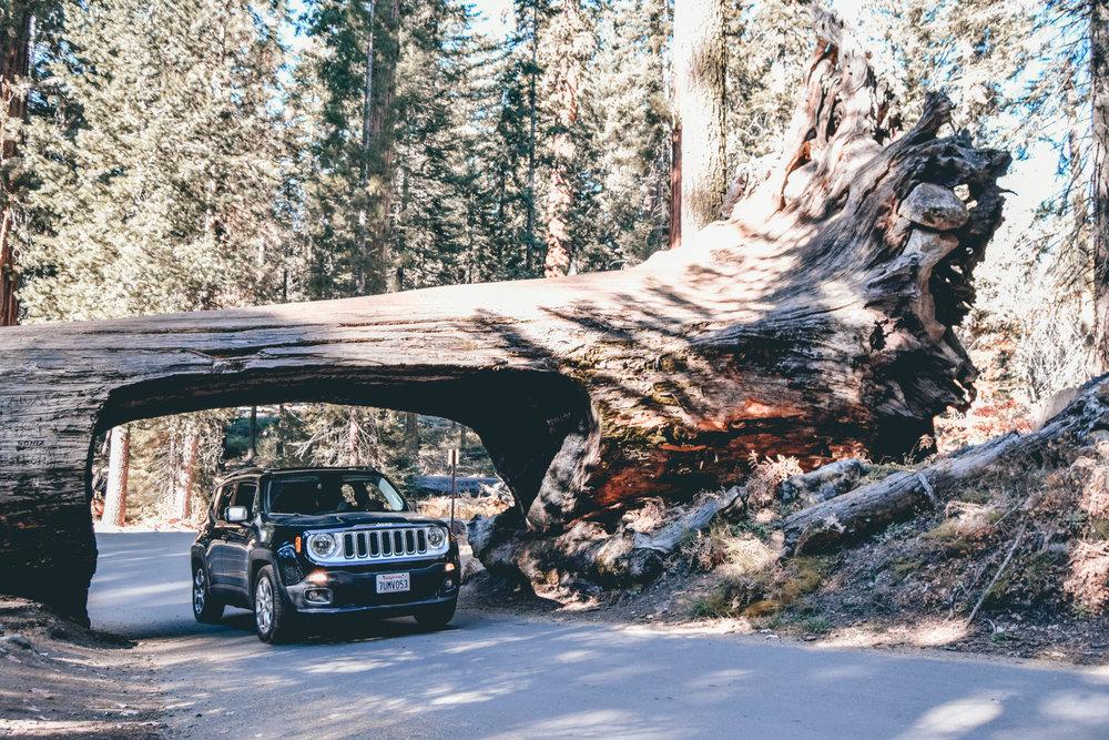 sequoia (1 of 1)-55.jpg