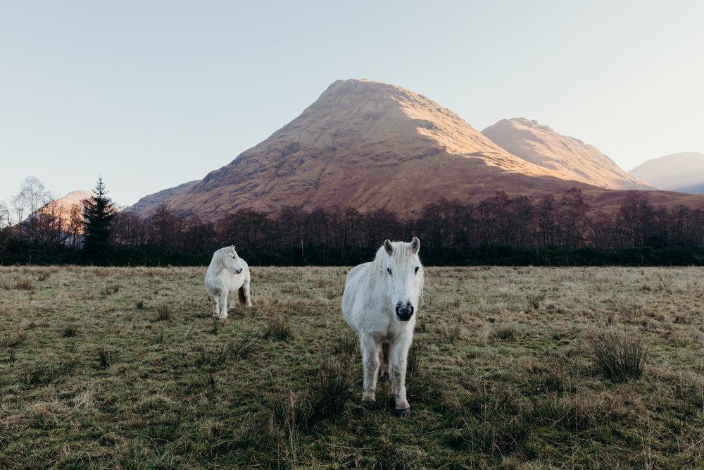 Scotland_Blog_107.JPG