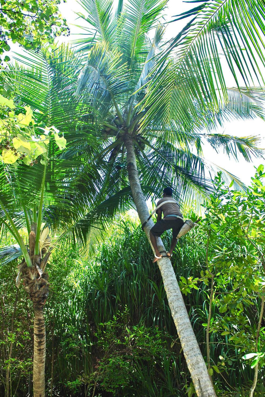 Eco Tour (Shangri-La Maldives)