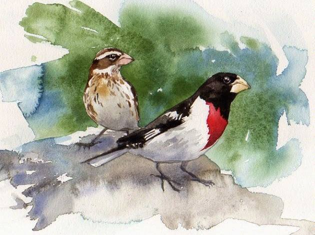 Rose-breasted Grosbeak Watercolor by Brian Bryson -  More prints for sale in the gift shop!