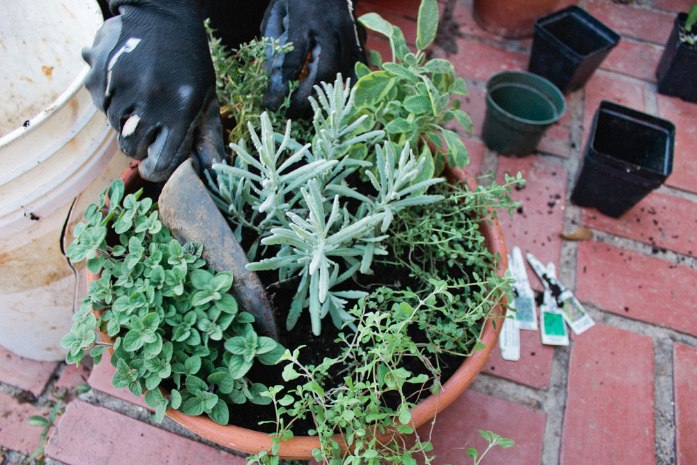 Grow your own herb garden in a pot!