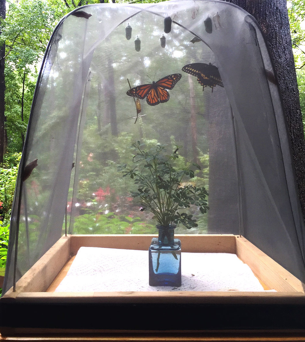 Comparing a cage of butterflies to