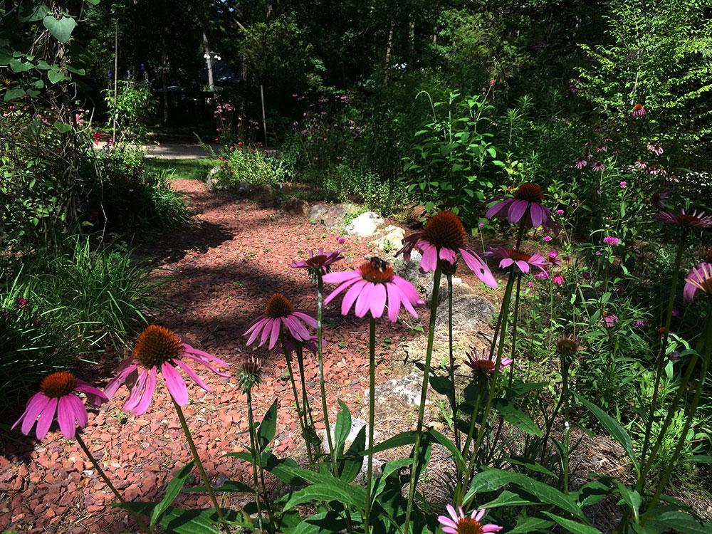 Merveilleux Five Essential Perennials For Florida Gardens